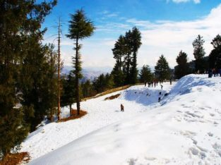 Great Himalayan Travels -Best Travel Agency Shimla